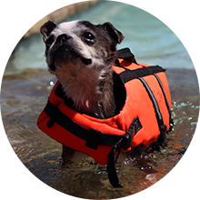 Small dog in life vest