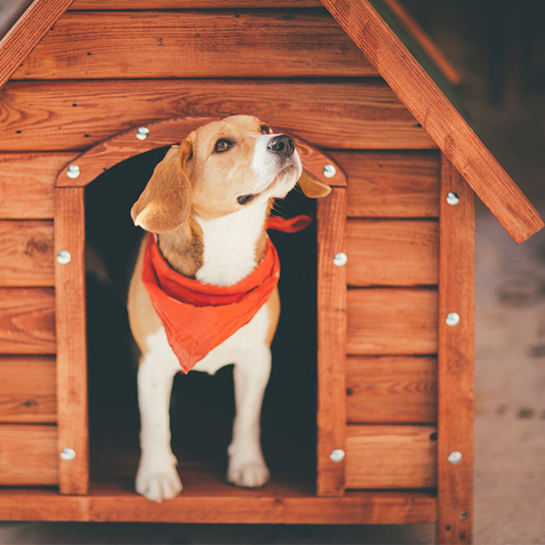 Dog inside dog house