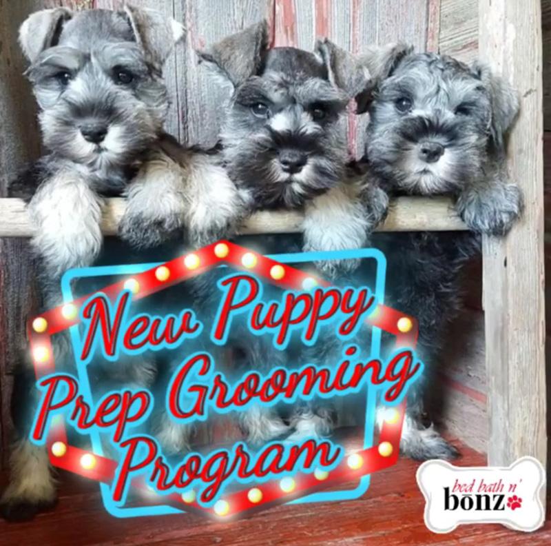 puppyprogram